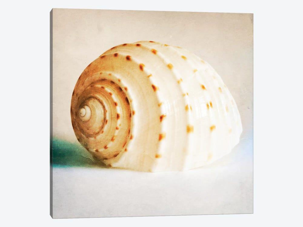 Antique Shell II by Tom Quartermaine 1-piece Canvas Art