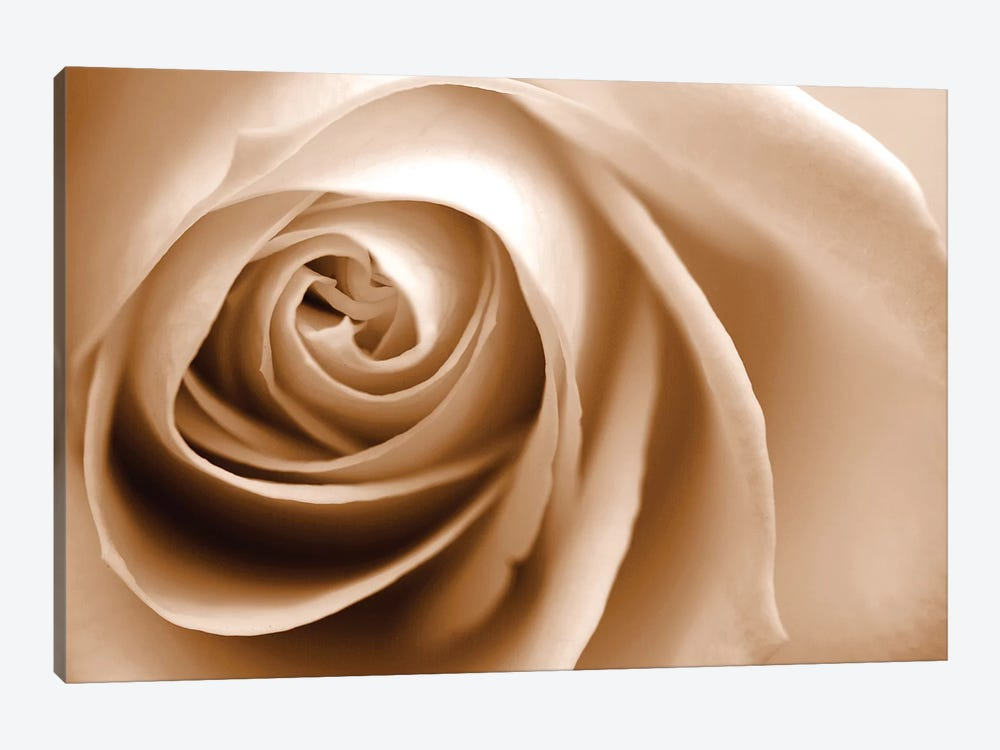 Sepia Rose I by Tom Quartermaine 1-piece Canvas Print