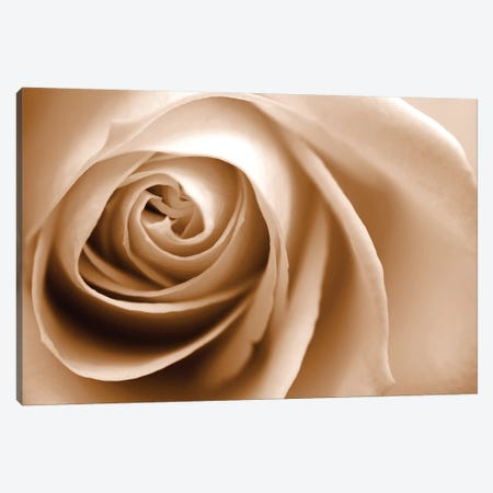 Sepia Rose I 3-Piece Canvas #TQU288} by Tom Quartermaine Art Print