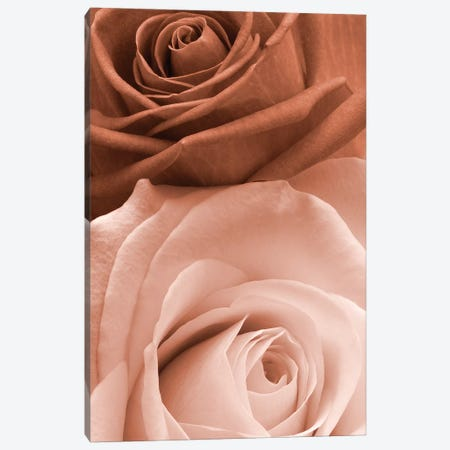Sepia Roses In Portrait Canvas Print #TQU289} by Tom Quartermaine Art Print
