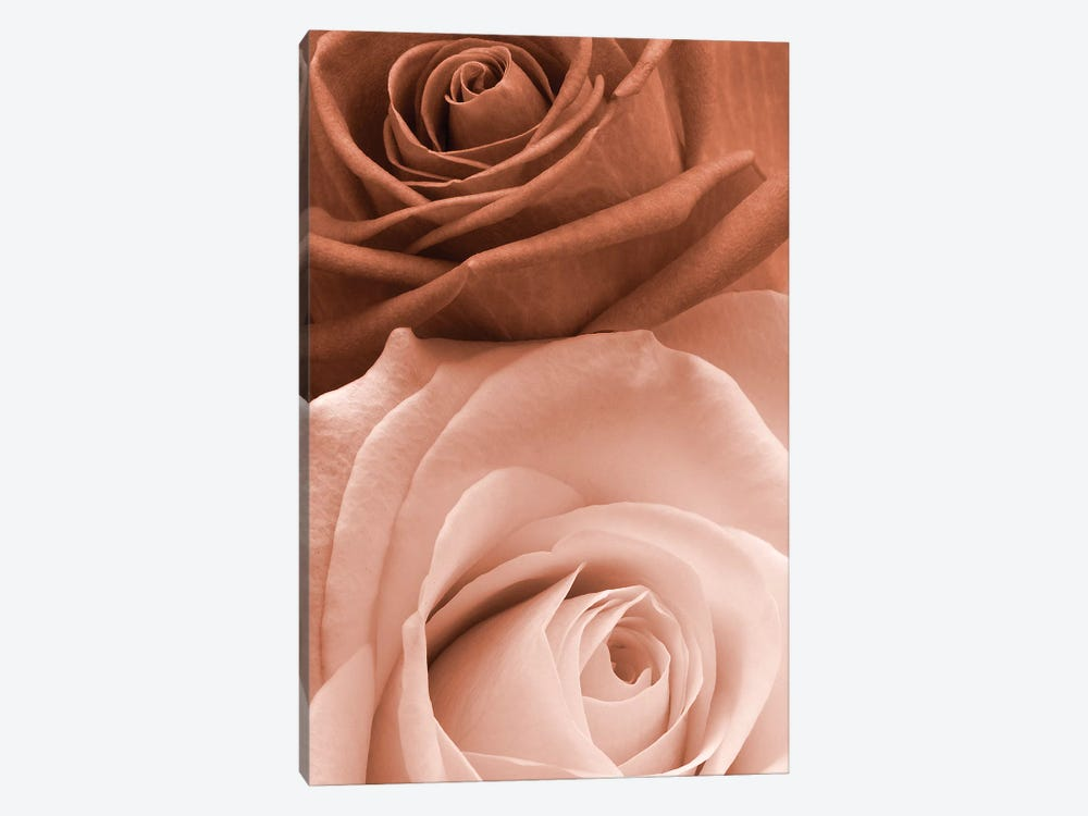Sepia Roses In Portrait by Tom Quartermaine 1-piece Canvas Art