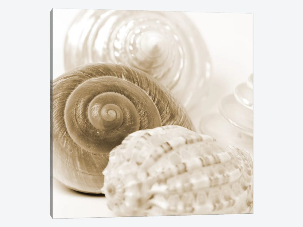 Sepia Shells by Tom Quartermaine 1-piece Canvas Wall Art