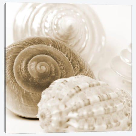 Sepia Shells 3-Piece Canvas #TQU290} by Tom Quartermaine Canvas Wall Art