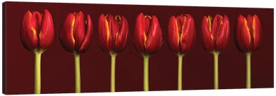 Seven Tulips In A Row Canvas Art Print