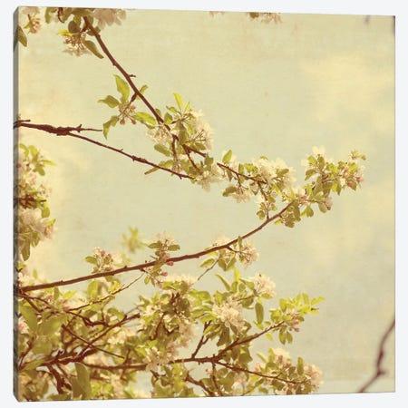 Spring Blossom On Tree I 3-Piece Canvas #TQU296} by Tom Quartermaine Canvas Print