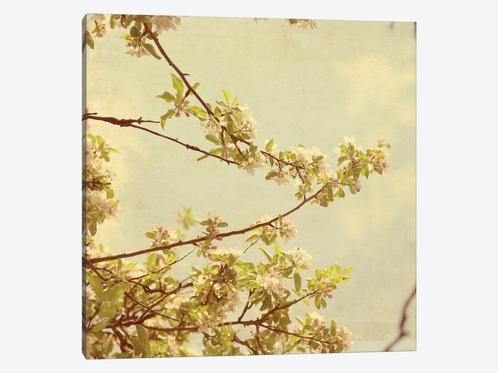 Spring Blossom On Tree I by Tom Quartermaine 1-piece Canvas Wall Art
