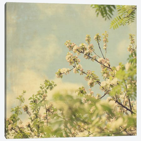 Spring Blossom On Tree II Canvas Print #TQU297} by Tom Quartermaine Canvas Art Print
