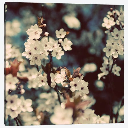 Spring Blossom On Tree III Canvas Print #TQU298} by Tom Quartermaine Canvas Wall Art