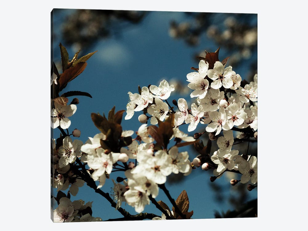 Spring Blossom On Tree IV by Tom Quartermaine 1-piece Art Print