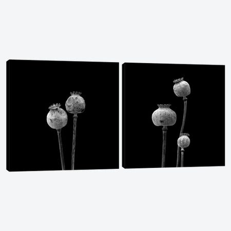 3 Poppy Heads B&W Diptych Canvas Print Set #TQU2HSET001} by Tom Quartermaine Canvas Wall Art