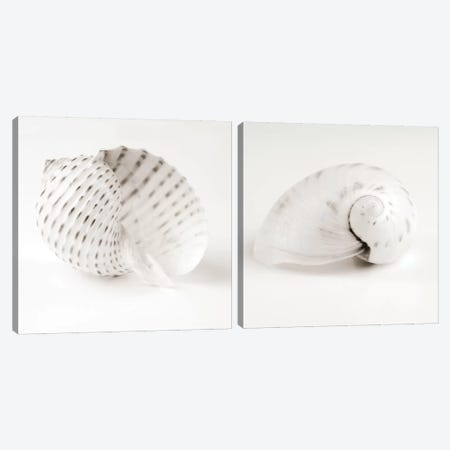 Shell B&W Diptych Canvas Print Set #TQU2HSET004} by Tom Quartermaine Canvas Art Print