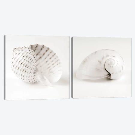 Shell B&W Diptych Canvas Print Set #TQU2HSET004} by Tom Quartermaine Canvas Art Print