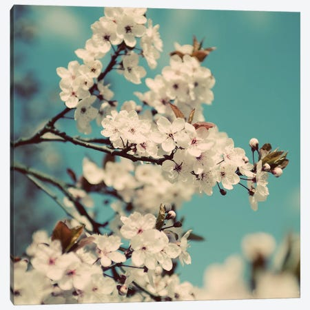 Spring Blossom On Tree V Canvas Print #TQU300} by Tom Quartermaine Canvas Artwork