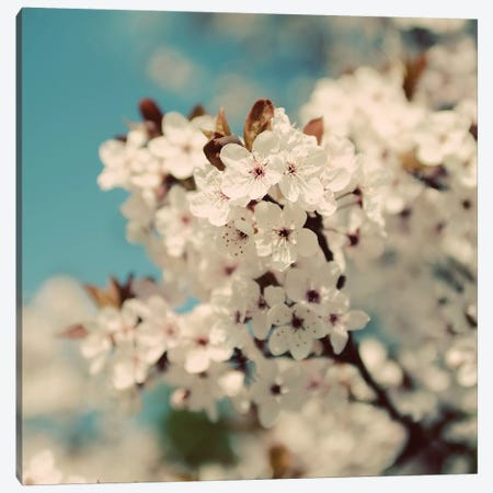 Spring Blossom On Tree VI Canvas Print #TQU301} by Tom Quartermaine Canvas Art