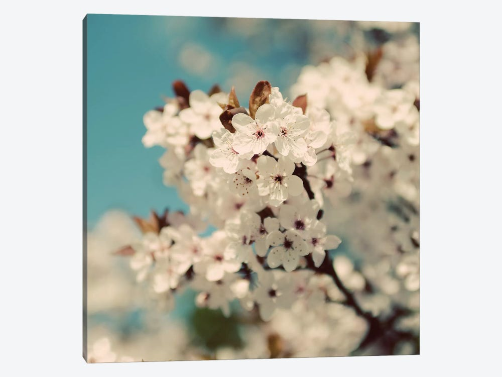 Spring Blossom On Tree VI by Tom Quartermaine 1-piece Canvas Art Print