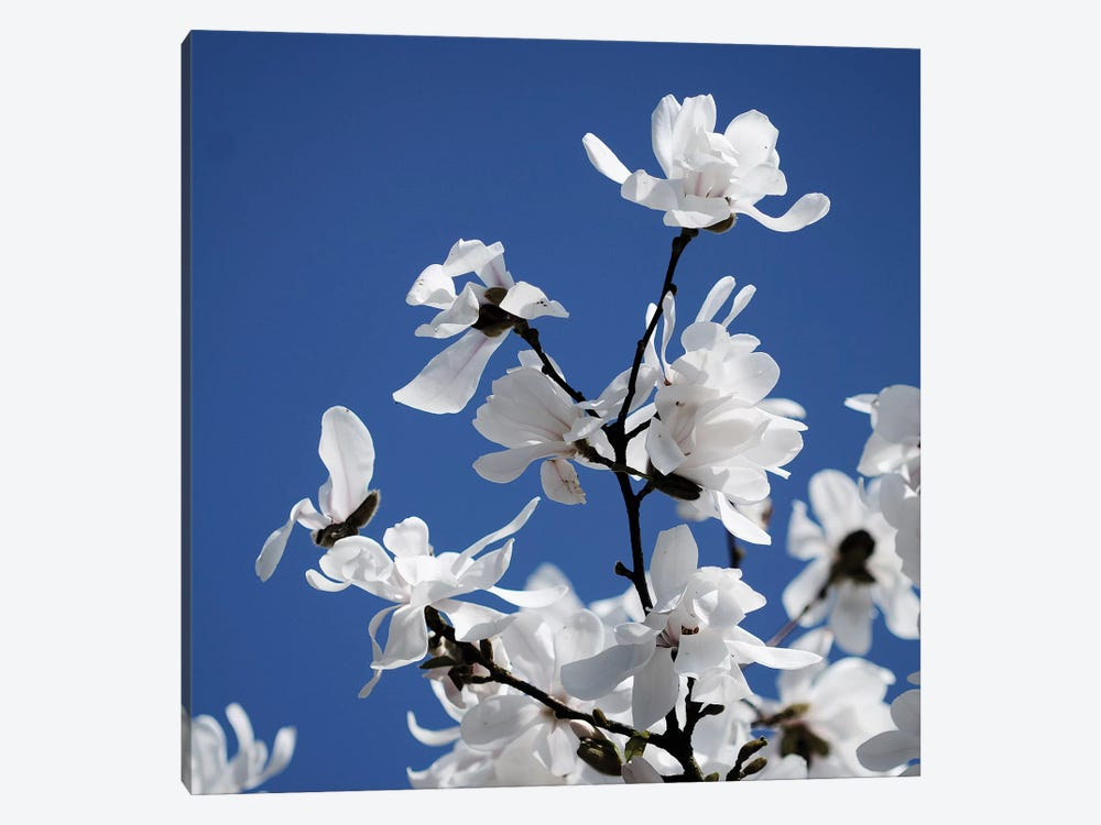 Spring Blossom On Tree VII 1-piece Canvas Art