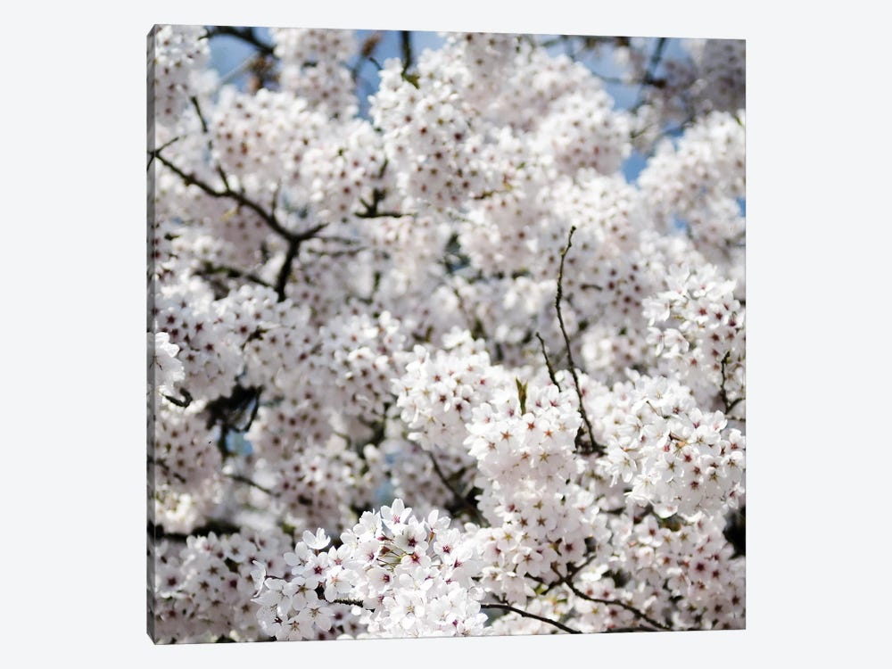 Spring Blossom On Tree VIII by Tom Quartermaine 1-piece Art Print