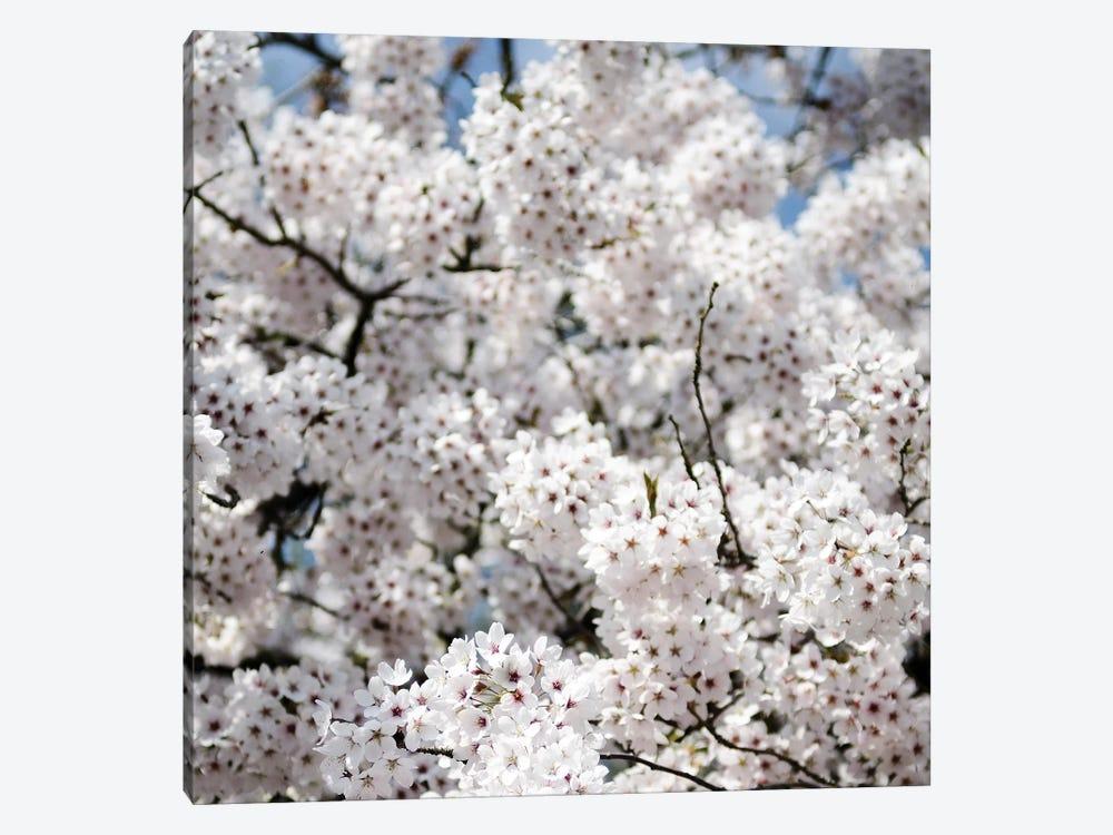 Spring Blossom On Tree VIII by Tom Quartermaine 1-piece Art Print