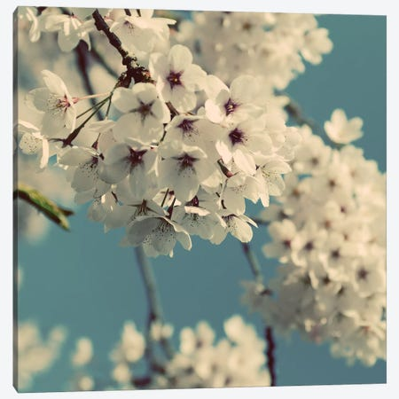 Spring Blossom On Tree IX Canvas Print #TQU304} by Tom Quartermaine Canvas Art Print