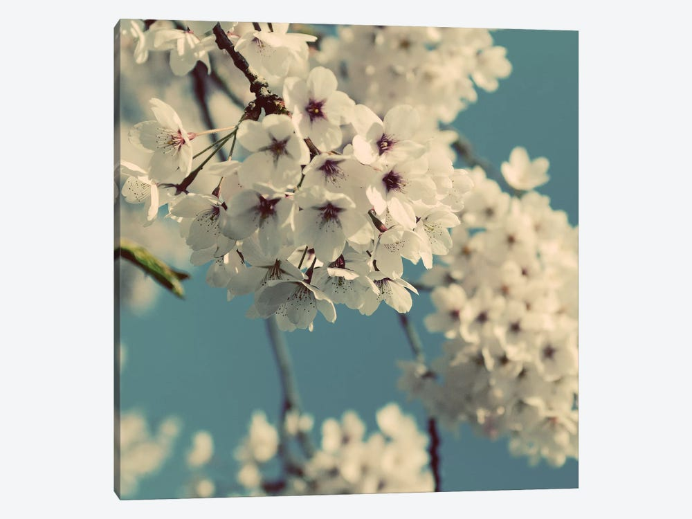 Spring Blossom On Tree IX 1-piece Canvas Wall Art