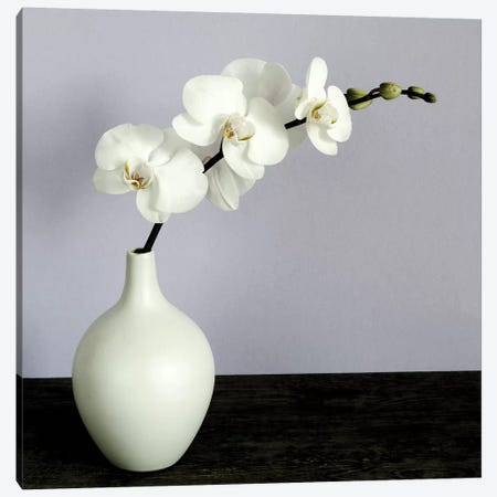 White Orchids In A White Vase Canvas Print #TQU305} by Tom Quartermaine Art Print