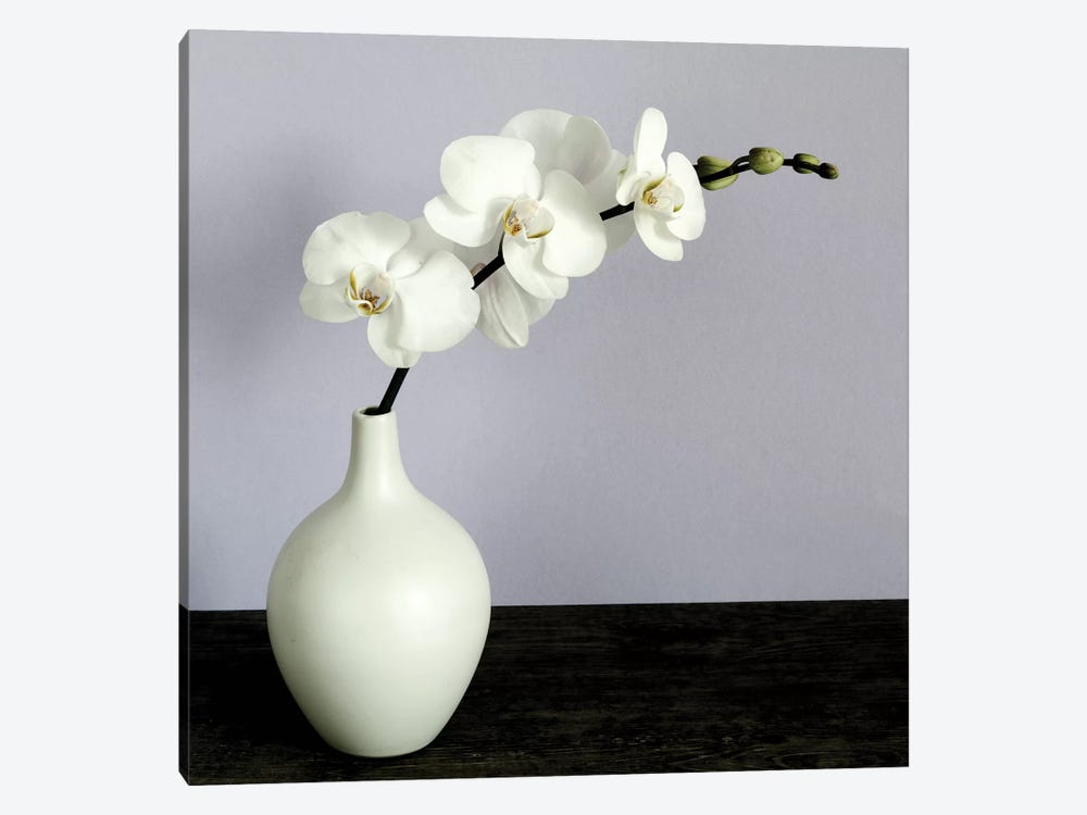 White Orchids In A White Vase by Tom Quartermaine 1-piece Art Print