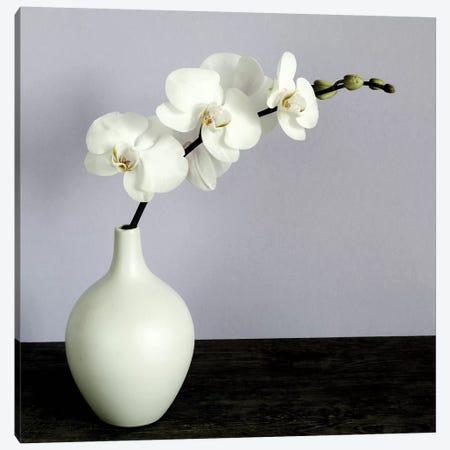 White Orchids In A White Vase Canvas Print #TQU305} by Tom Quartermaine Art Print