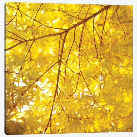 Yellow Fall Leaves VII Canvas Print #TQU310} by Tom Quartermaine Canvas Art Print