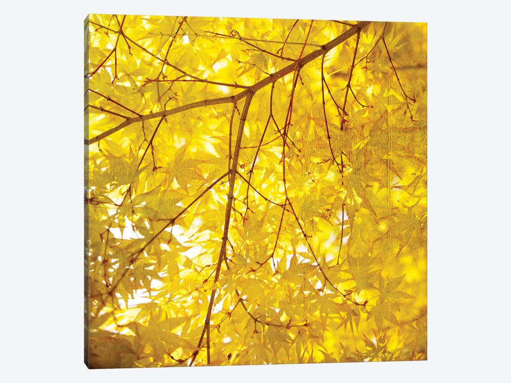 Yellow Fall Leaves VII by Tom Quartermaine 1-piece Canvas Art Print