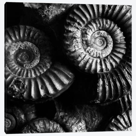 B&W Ammonite Fossils 3-Piece Canvas #TQU31} by Tom Quartermaine Canvas Art Print