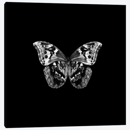 B&W Butterfly On Black 3-Piece Canvas #TQU33} by Tom Quartermaine Canvas Print