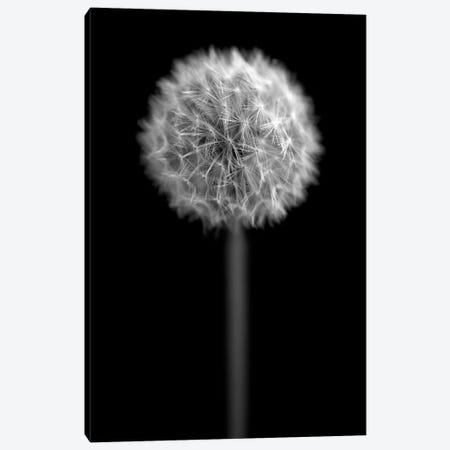 B&W Dandelion On Black Portrait Canvas Print #TQU37} by Tom Quartermaine Canvas Wall Art
