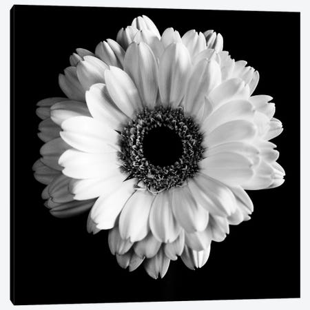 B&W Flower On Black I 3-Piece Canvas #TQU39} by Tom Quartermaine Canvas Art Print