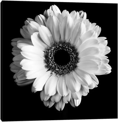 B&W Flower On Black I Canvas Art Print