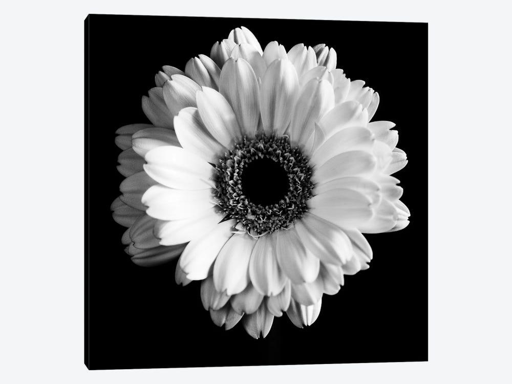 B&W Flower On Black I by Tom Quartermaine 1-piece Art Print