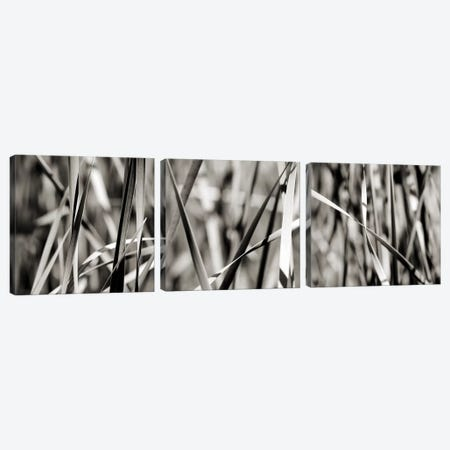 Leaves B&W Triptych Canvas Print Set #TQU3HSET001} by Tom Quartermaine Canvas Art