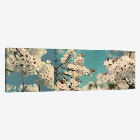 Spring Blossom On Tree Triptych Canvas Print Set #TQU3HSET003} by Tom Quartermaine Canvas Artwork