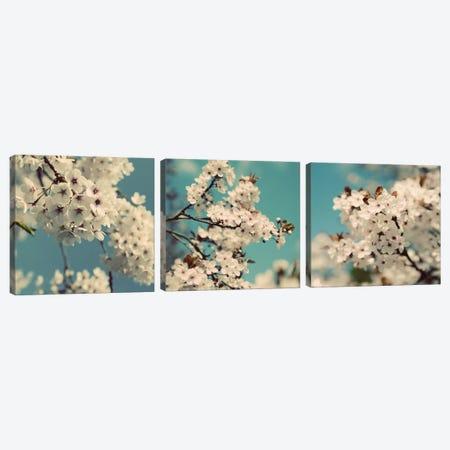 Spring Blossom On Tree Triptych Canvas Print Set #TQU3HSET003} by Tom Quartermaine Canvas Artwork