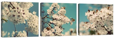 Spring Blossom On Tree Triptych Canvas Art Print