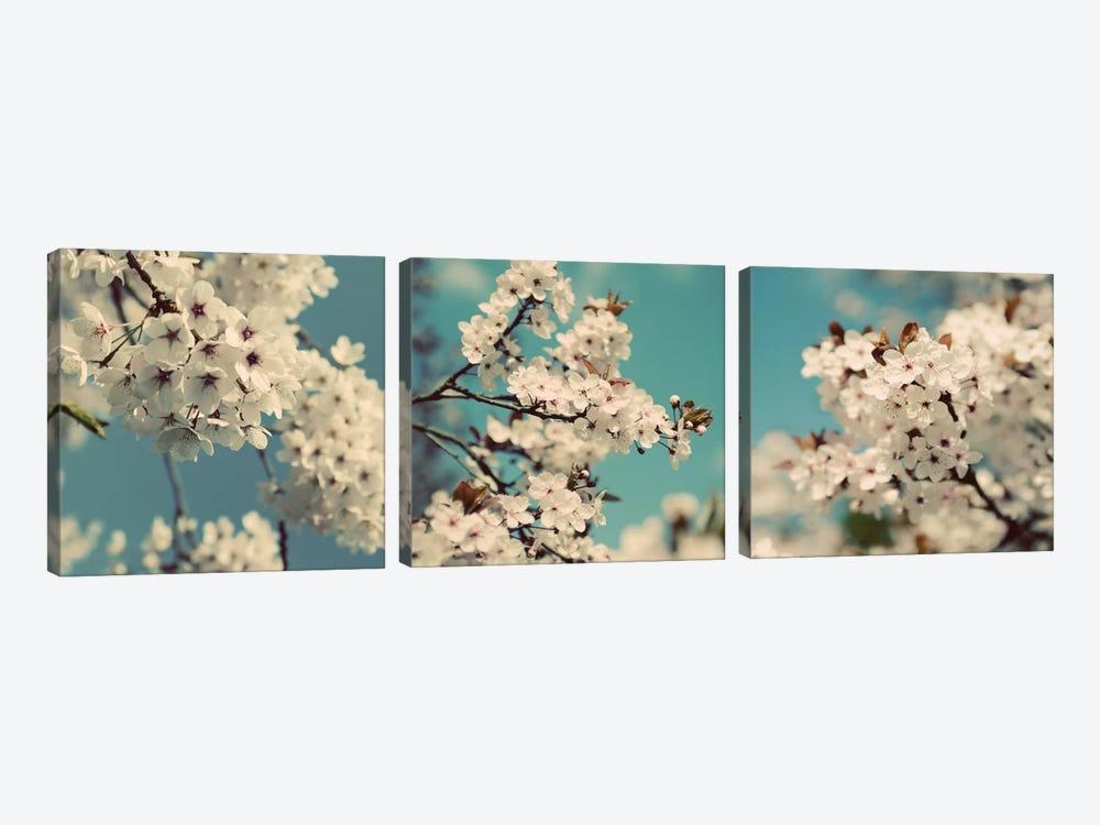 Spring Blossom On Tree Triptych by Tom Quartermaine 3-piece Canvas Art Print