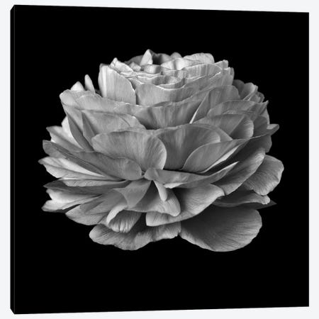B&W Flower On Black II Canvas Print #TQU40} by Tom Quartermaine Canvas Art