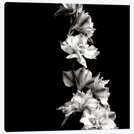 B&W Flowers On Black Canvas Print #TQU41} by Tom Quartermaine Canvas Art