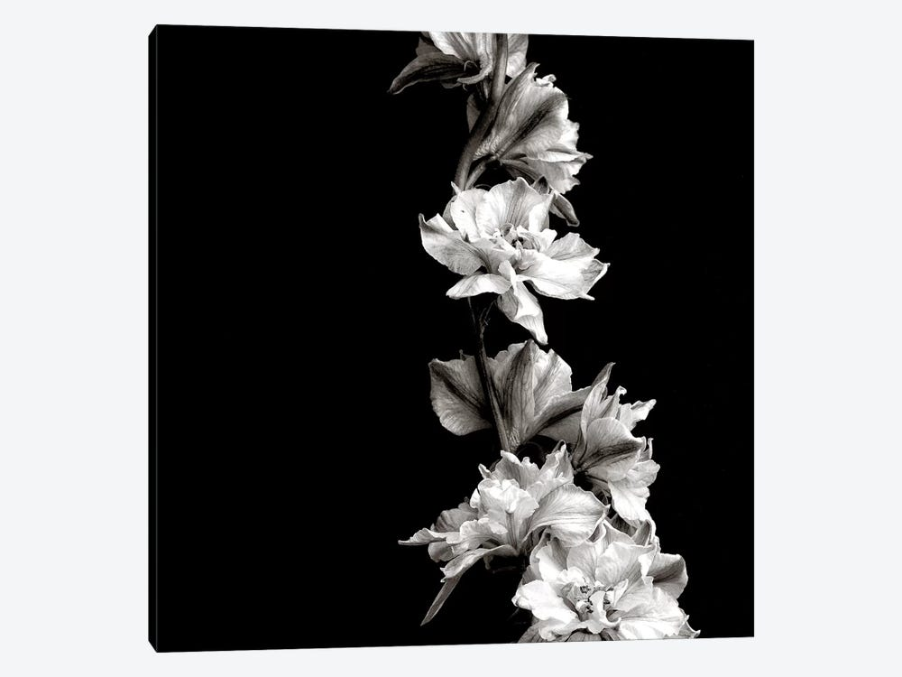 B&W Flowers On Black by Tom Quartermaine 1-piece Canvas Artwork
