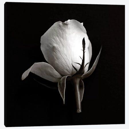 B&W Rose On Black I Canvas Print #TQU47} by Tom Quartermaine Canvas Art Print