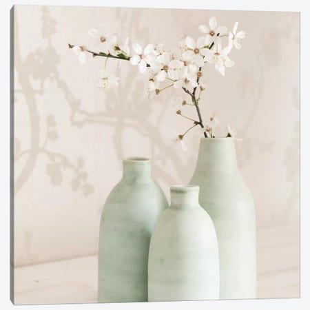 Blossom With 3 Vases Canvas Print #TQU59} by Tom Quartermaine Canvas Print