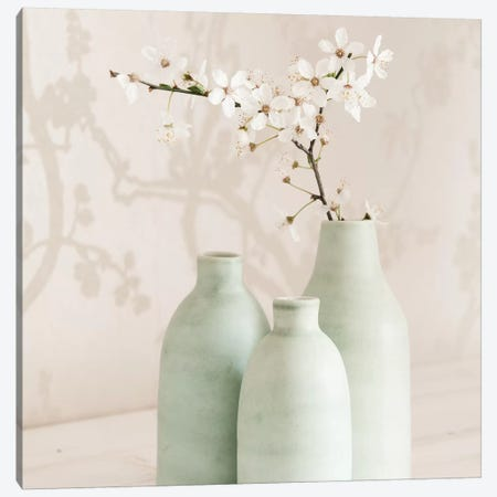 Blossom With 3 Vases Canvas Print #TQU59} by Tom Quartermaine Canvas Print
