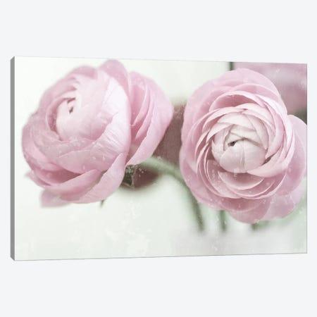 2 Pink Ranunculus 3-Piece Canvas #TQU5} by Tom Quartermaine Art Print