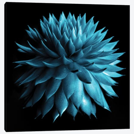 Blue Cacti On Black 3-Piece Canvas #TQU61} by Tom Quartermaine Canvas Art