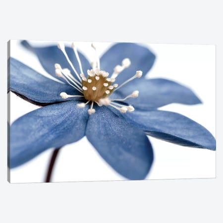 Blue Flower On White II 3-Piece Canvas #TQU62} by Tom Quartermaine Canvas Artwork