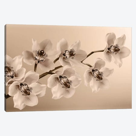Branch Of Sepia Orchids Canvas Print #TQU67} by Tom Quartermaine Art Print